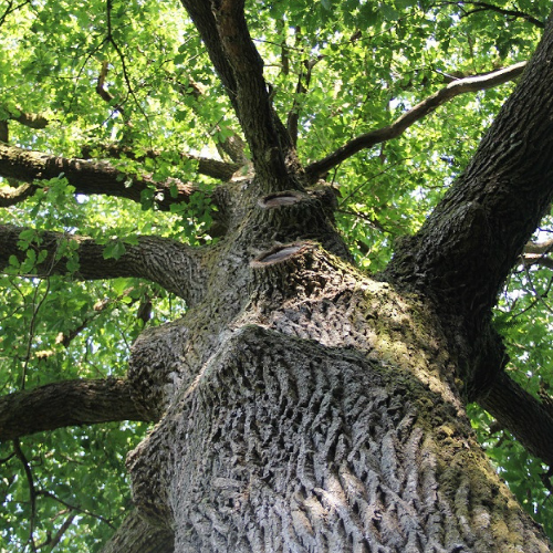 arbre sylvotherapie harmonie d ardwen